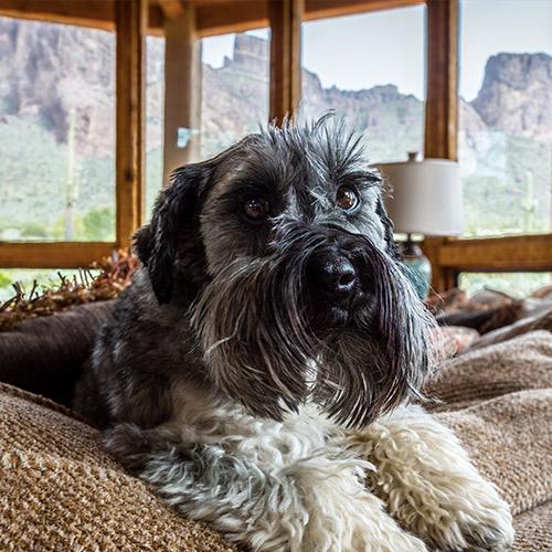 Captain the Dog Testimonial